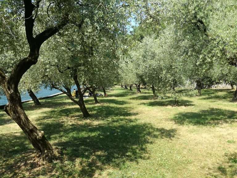 monteisola-iseo-guide-6